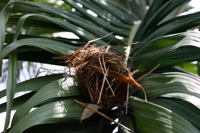 birds-nest