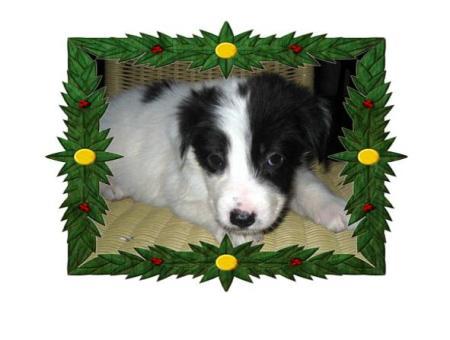 puppy-look